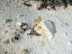 30/04/2015 - Ovo eclodido de tartaruga marinha