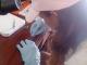 14/03/2015 - Daniela realizando o esfregaço sanguíneo