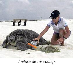 Leitura de microchip